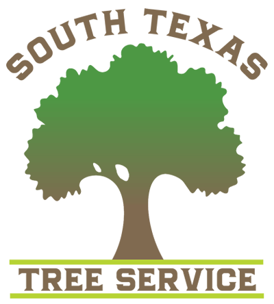 South Texas Tree Service: Tree Removal Pruning & Trimming